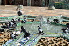 Pigeons playing with water in a fountain. Stock Photos