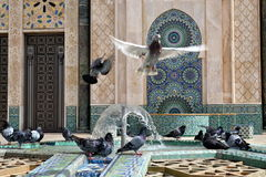Pigeons playing with water in a mosque's fountain. stock photo