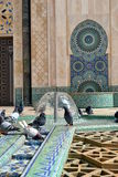 Pigeons playing with water in a mosque's fountain (portrait orientation). royalty free stock image