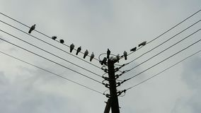 Pigeons on a pole. A group of pigeons on a electricity pole Royalty Free Stock Photography