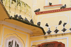 Jaipur City Palace. Pigeons resting on City Palace balcony stock photos