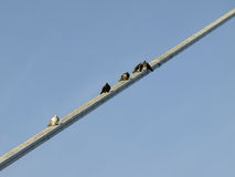 Pigeons resting. On the construction of a suspension bridge Stock Photos
