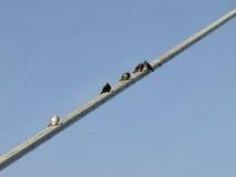 Pigeons resting Stock Photos