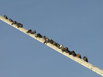 Pigeons resting Royalty Free Stock Photography