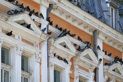 Free Pigeons Resting On Historic Building Royalty Free Stock Photography - 156780817