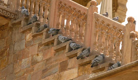 Pigeons resting under the shade. Medieval structure made by rajputana clans at jaipur in India. Here you can see many pigeons escape from scorching heat & royalty free stock photography