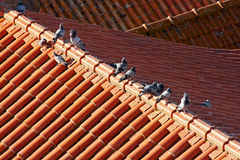 Pigeons on the roof. Pigeons on the red roof Stock Photos