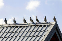 Pigeons on the Roof Stock Photos