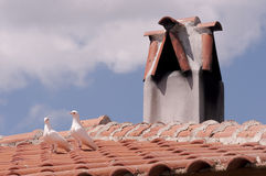 Pigeons on roof by chimney Royalty Free Stock Photo