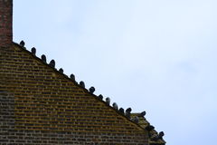 Pigeons on the roof Stock Images