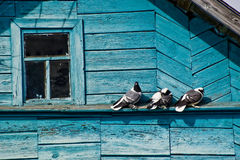 Pigeons on the roof of the house Royalty Free Stock Images