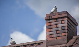 Pigeons on the roof. Royalty Free Stock Image