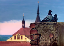 Pigeons on a roof in Prague early morning Stock Photography