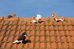 Pigeons on the roof Royalty Free Stock Image