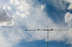 Pigeons on a roost against the sky with clouds stock photography