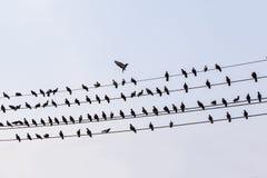 Pigeons row Royalty Free Stock Photos