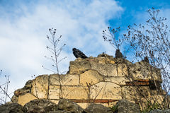Pigeons on a ruined fortress wall at Kalemegdan in Belgrade Stock Photo