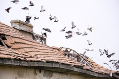 Pigeons on ruined house Royalty Free Stock Image