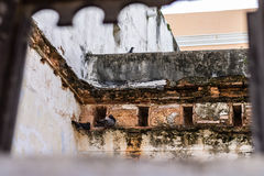 Pigeons of San Juan. Photo of a group of pigeons nesting on one of the abandoned buildings in Old San Juan Stock Photography
