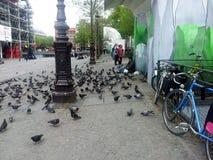 Pigeons sans abri Image libre de droits