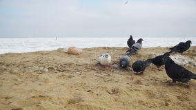 Pigeons and Seagulls Eat Bread on the Beach in Winter Frozen Ice-Covered Sea Background. Slow Motion stock video
