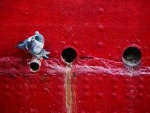 Pigeons on ship hull Stock Photo