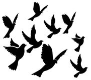 Pigeons. Silhouette of Pigons on white background Royalty Free Stock Photo