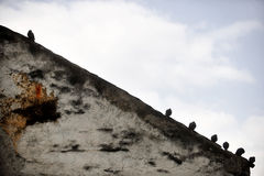 Pigeons silhouettes on sloping roof Royalty Free Stock Photography