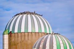 Pigeons on Silo Stock Photos
