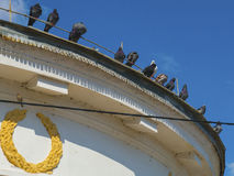 Pigeons sit on the edge of the building roof Stock Photography