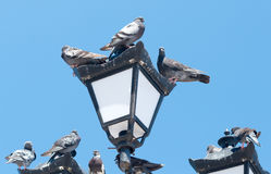 Pigeons sit on the lights Stock Photos