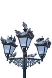 Pigeons sit on the lights Royalty Free Stock Photography