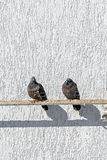 Pigeons sit on a pipe near a white wall in a sunny day Stock Image