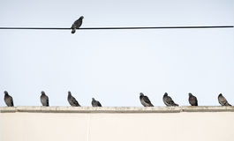 Pigeons sit side by side on the roof of the house in the morning. Wild pigeons sit next on the rooftop and on a wire against the blue sky Stock Photos