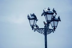 Pigeons sit on a street lamp. The pigeons sit on a street lamp stock photos