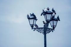 Pigeons sit on a street lamp stock photos