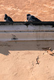 Pigeons sit on the wall Royalty Free Stock Photos
