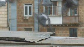 Pigeons sit on the windowsill stock video footage