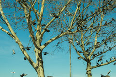 Pigeons sitting on the tree branch Stock Image