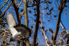 Pigeons sitting on the tree branch Stock Photo