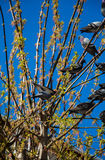 Pigeons sitting on the tree branch Stock Images