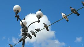 Birds are sitting on the wire. Pigeons are sitting on a wire against the background of blue clear sky with white clouds stock footage