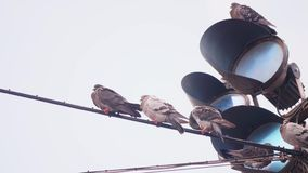 Pigeons sitting on a wire in front of traffic lights. A flock of Pigeons sitting on a wire in front of traffic lights in the cold stock video footage