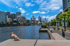 Pigeons and Southbank promenade in Melbourne. Pigeons, Yarra river and Southbank promenade in Melbourne, Australia Royalty Free Stock Photo