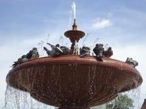 Pigeons. Stock Photo