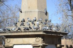 Pigeons in square Stock Photography