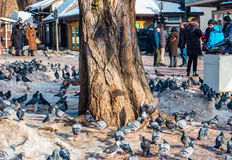 Pigeons in the square Royalty Free Stock Photos