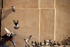 Pigeons on a square Stock Photos
