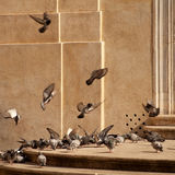 Pigeons on a square Royalty Free Stock Photos
