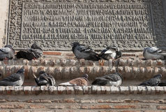 Pigeons - RAW format Royalty Free Stock Photo